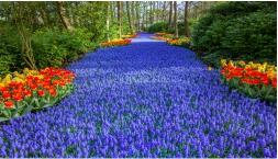 Zum Tulpenmeer in den Frühlingsgarten